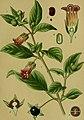 Die Giftpflanzen Deutschlands (1910) (20738426890).jpg