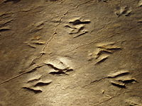 Dinosaur State Park (Rocky Hill, CT) - close-up.JPG