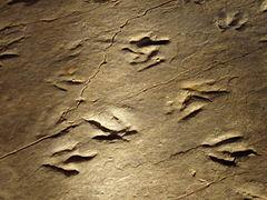 Dinosaur State Park (Rocky Hill, CT) - close-up.jpg