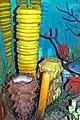 Diorama of a Carboniferous seafloor - sponges 2 (31733652318).jpg