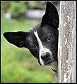 Dog having a lookand (2951318832).jpg