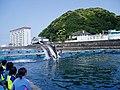 Dolphin Base060504.jpg
