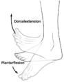 Dorsalextension und Plantarflexion.PNG