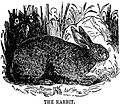 Drawing of Rabbit.jpg