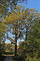 Drei Stieleichen in Frankenreith 01 2014-10 NDM HO-093.jpg