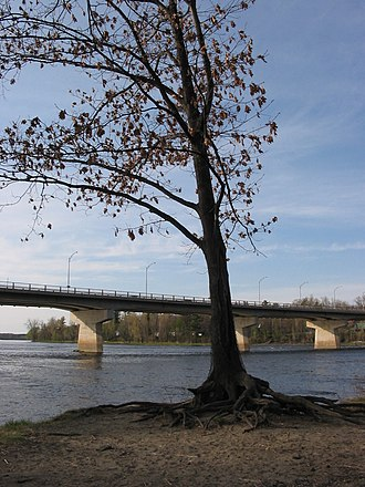 Saint-François River - A tree on the banks of the  Saint-François River in Drummondville