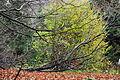 Drzewo 0068K.jpg