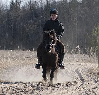 Shetland pony - Image: Dusty Trail