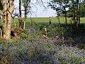Edge of Roydon Woods, Calveslease Copse, New Forest - geograph.org.uk - 408511.jpg