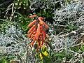Ein Gedi Botanical Gardens004.jpg