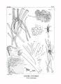 Encyclopédie méthodique - Systeme Anatomique, Pl2.png