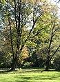 Englischer Garten Herbst-15.jpg