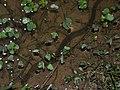 Enhyd plumbe 120607-0127 krw.jpg