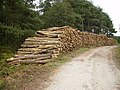 Enormous quantity of harvested logs - geograph.org.uk - 554009.jpg