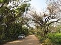 Estr. da ecologia entre Indaiatuba-Itupeva Ago 2010. - panoramio.jpg