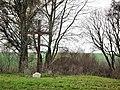 Evangelical cemetery in Gonice (3).jpg