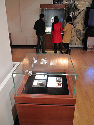 Exhibit design - Showcase containing two stone tools from the Lower Paleolithic cave site of Darband, Exhibition, National Museum of Iran.