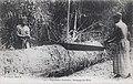 Exploitation forestière-Recépage des billes.jpg