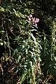 FND Halbtrockenrasen Heidäcker 0039.jpg