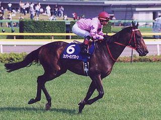 Fairy King Prawn Australian-bred Thoroughbred racehorse