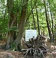Familienbaum - panoramio.jpg