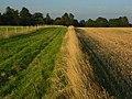 Farmland, Great Durnford - geograph.org.uk - 518788.jpg