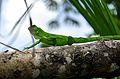 Fauna 2-2 parque estadual do jalapão.jpg