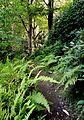Ferns, Mount Auburn Cemetery, Cambridge, Massachusetts.jpg
