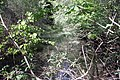 Feuchtgebiet Oberholz I 05.jpg