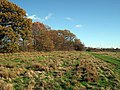 Field near Smugley Farm, Goudhurst, Kent - geograph.org.uk - 1041060.jpg