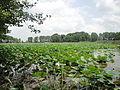 File-Tir bijan Lagoon 139004 3.JPG
