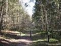 Fire Break in Wendover Woods - geograph.org.uk - 1202222.jpg