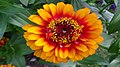 Fleur144.jpg