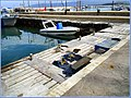 Flickr - ronsaunders47 - LATCHI BAYCATS.CYPRUS.jpg