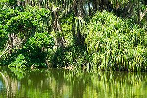 Reserva de Marapendi (Rio de Janeiro) - Marapendi Reserve