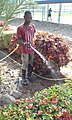 Florist and Gardener.jpg