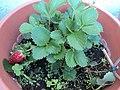 Flowers.... - panoramio (1).jpg