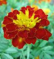 Flowers (176).jpg