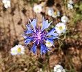 Flowers (Wrzesnia) (3).jpg