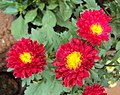 Flowers - Uncategorised Garden plants 90.JPG