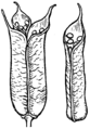 Follicles (PSF).png