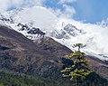 Foothills of Annapurna III - Annapurna Circuit, Nepal - panoramio (1).jpg