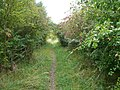 Footpath leading to Woodcock Plantation - geograph.org.uk - 566236.jpg
