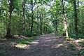 Forêt domaniale de Bois-d'Arcy 68.jpg
