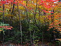 Forest-autumn-colors - West Virginia - ForestWander.jpg