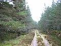 Forest Road, Inveruglas. - geograph.org.uk - 6538.jpg