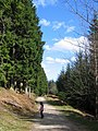 Forest Trail - geograph.org.uk - 1356254.jpg