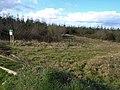 Forestry near Merryfield - geograph.org.uk - 740351.jpg