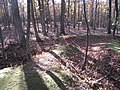 Fort Mill Ridge Civil War Trenches Romney WV 2008 10 30 16.JPG