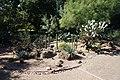 Fort Worth Botanic Garden October 2019 31 (Cactus Garden).jpg